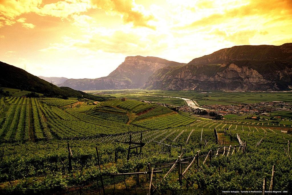 Trentino Wein