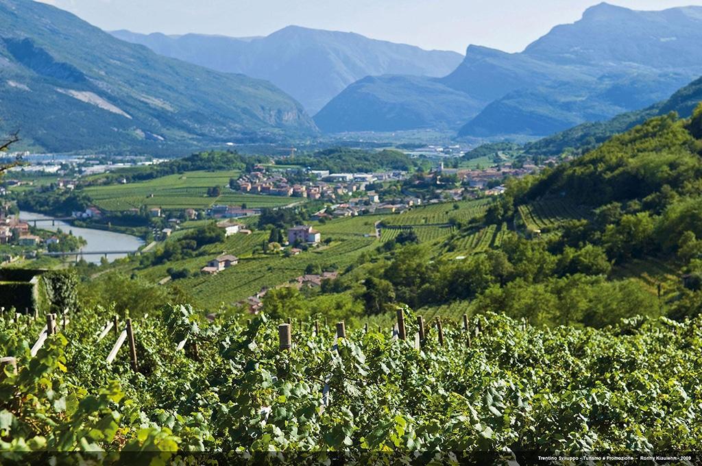 Wein Trentino
